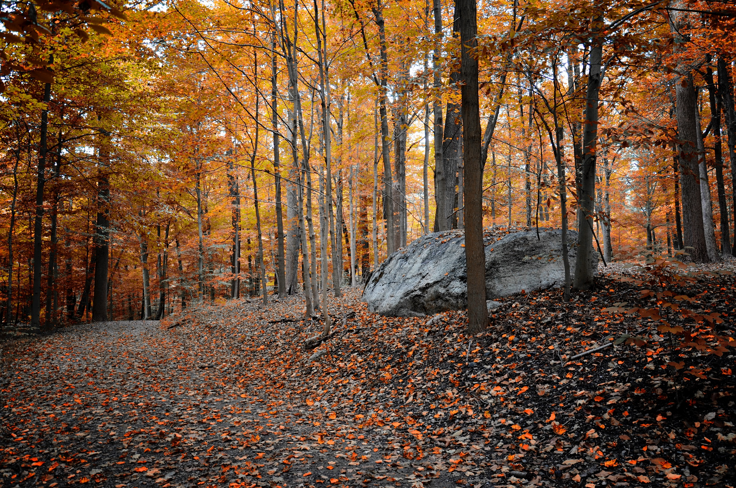 Witches Spring Trail in Rockefeller State Park Preserve, where it passes Spook Rock.
