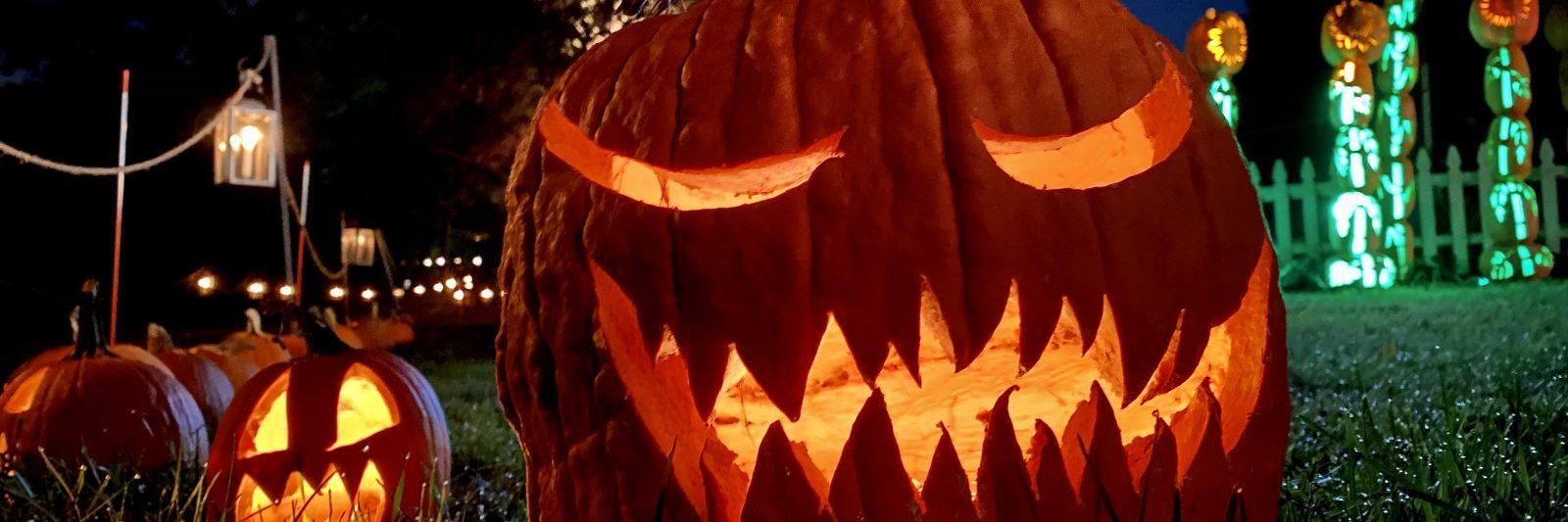 Illuminated jack o'lanterns at Pumpkin Blaze.
